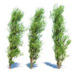 3d model of poplar trees