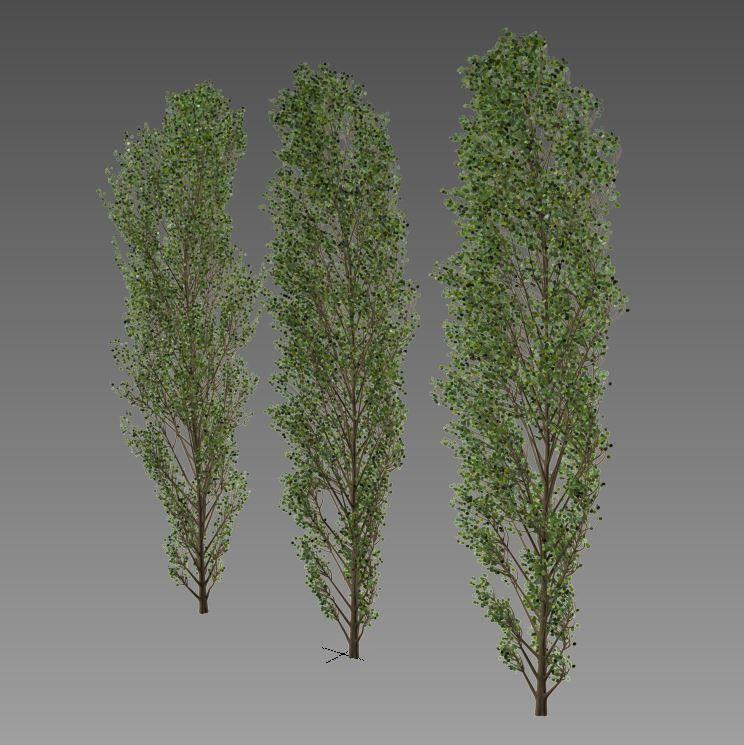 https://img2.cgtrader.com/items/2347448/1b9171dd47/lombardy-poplar-v1-3d-model-max-fbx.jpg