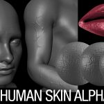 human skin alphas brush bundle